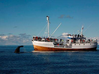 Whalesafari Andenes Vesteralen: 100% Whale Guarantee!