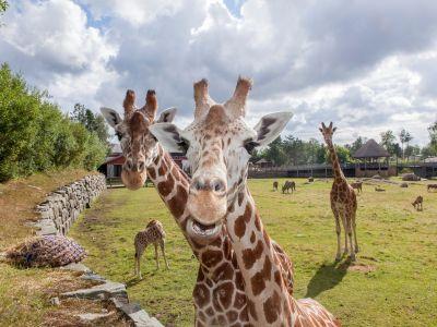 Dyreparken, Kristiansand Zoo and Amusement Park