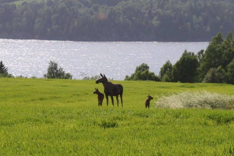Olberg Camping elanden spotten