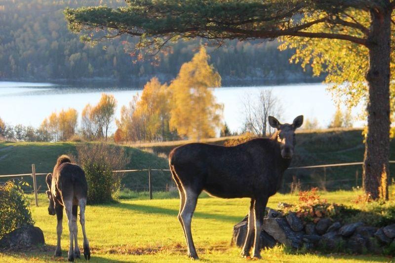 Olberg Camping Elandsafari